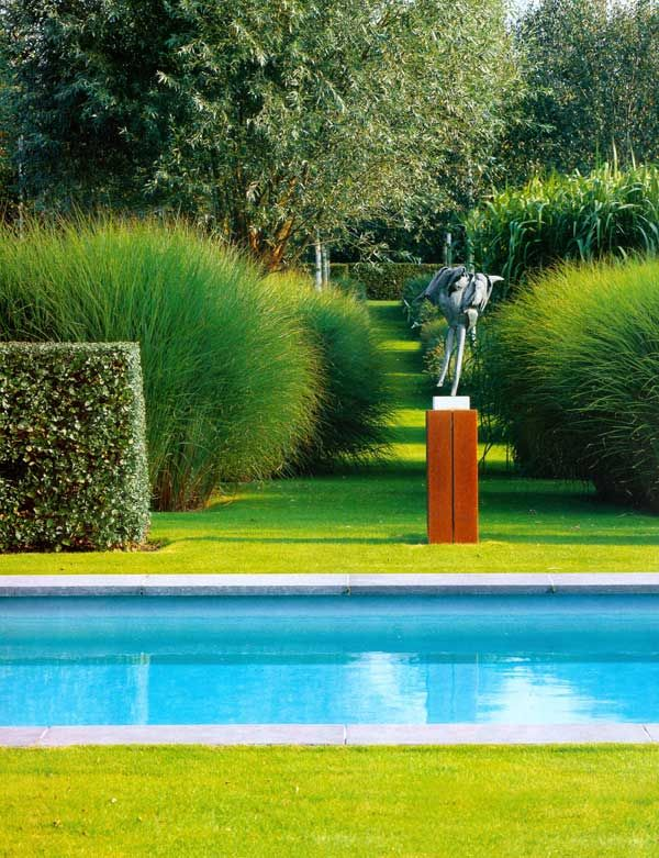 25 best ideas about miscanthus sinensis gracillimus on for Modern ornamental grasses