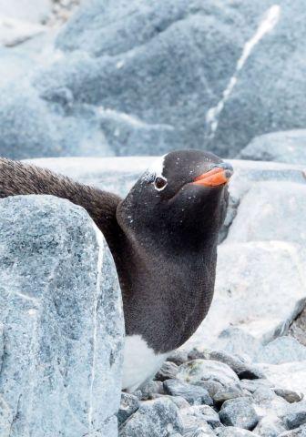antarctica, argentina, buenos aires, trip of a lifetime, adventure travel, 2017