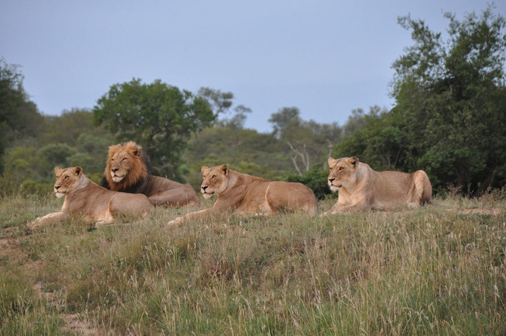 Safarious - Pics from our latest Safari / Will Fox / Gallery
