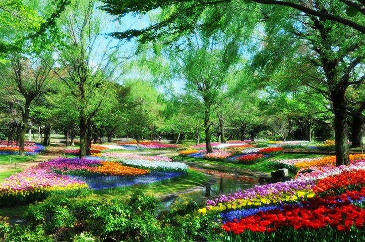 Showa memorial Park.  Tachikawa city Tokyo Japan.