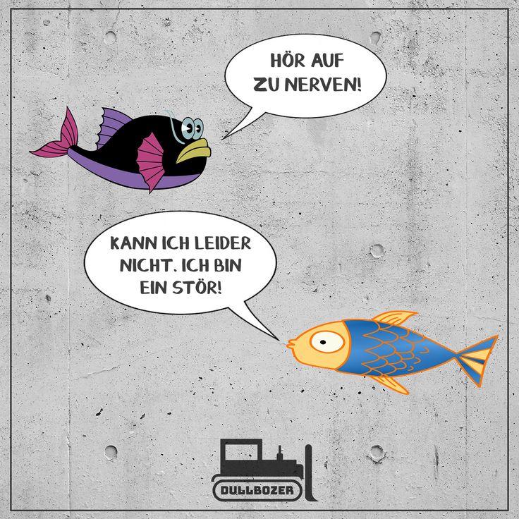 """""""Hör auf zu nerven!"""" """"Kann ich leider nicht, ich bin ein Stör."""" Witze, Witz, Flachwitz, Sparwitz, Fisch Witz, Fische, Wortwitz, deutsch meme, lustiges meme, witziges meme, Unterhaltung, lustiges Zitat, Stör Fisch, Angler Witz, Tierwitz, Natur Witz, Angeln, Dullbozer, fun"""