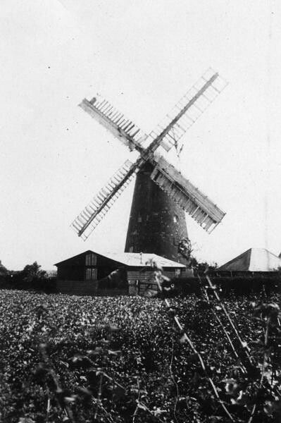 Pagham Nyetimber tower mill c 1900s.