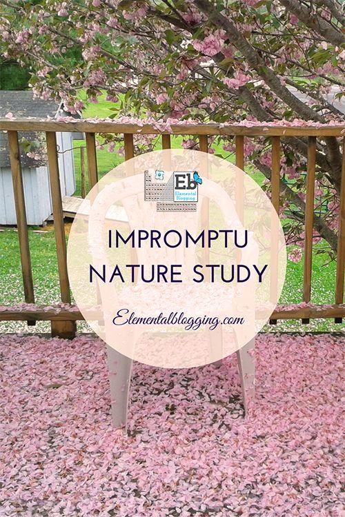 A glimpse on what Impromptu Nature Study looks like!