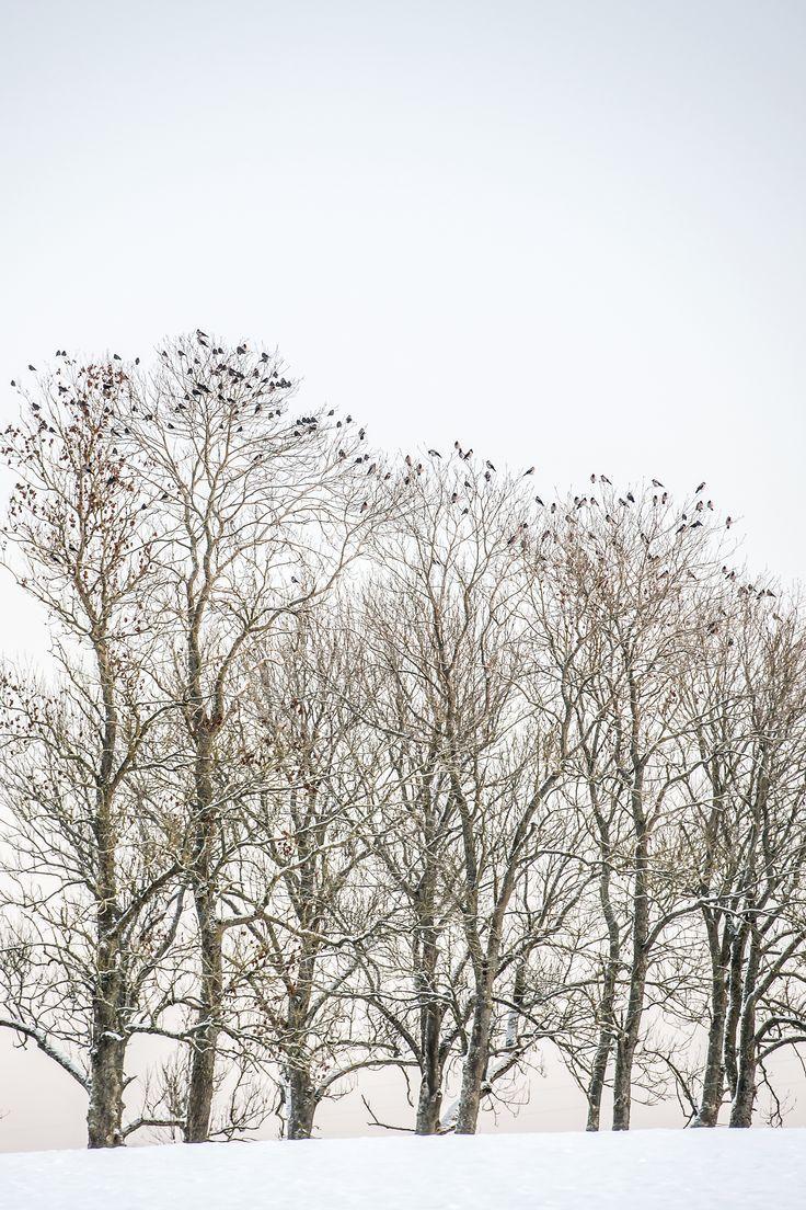 Trees on line