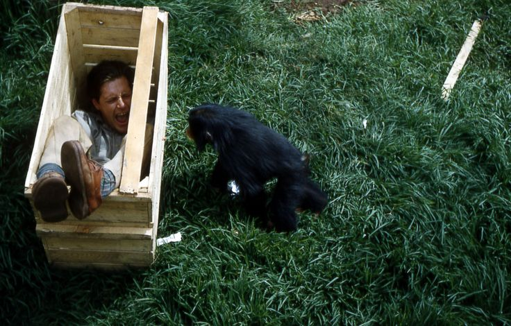 Gerald Durrell tries to convince a chimpanzee to come into a crate. Cameroon, 1957.