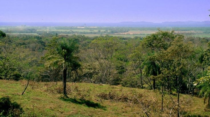 Colinas de Miramar has ocean view real estate land in Costa Rica with natural greenery. The owners have been very careful not to permit any type of deforestation, exotic tree removals, or disturbances to the natural wildlife and fauna, leaving the property in its natural, pristine state.