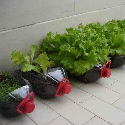 Use bottled five gallons of water and cultivate what you want. Ideal for anyone who lives in an apartment and can not afford to have his own garden.