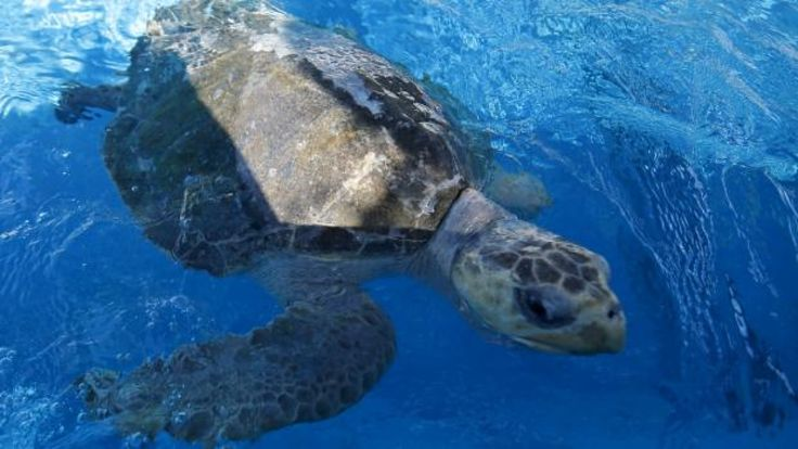 #Hundreds of dead sea turtles found off El Salvador - CBC.ca: CBC.ca Hundreds of dead sea turtles found off El Salvador CBC.ca A team of…