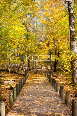 walkway and autumn trees. - Image of walkway and autumn trees.: Perfect Flowers, Gorgeous Flowers, Favorite Places, Nature Designs, Nature Wishlist, Interesting Flowers, Flowers Designs, Autumn Trees