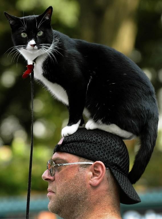 Кошка с хозяином картинки нас