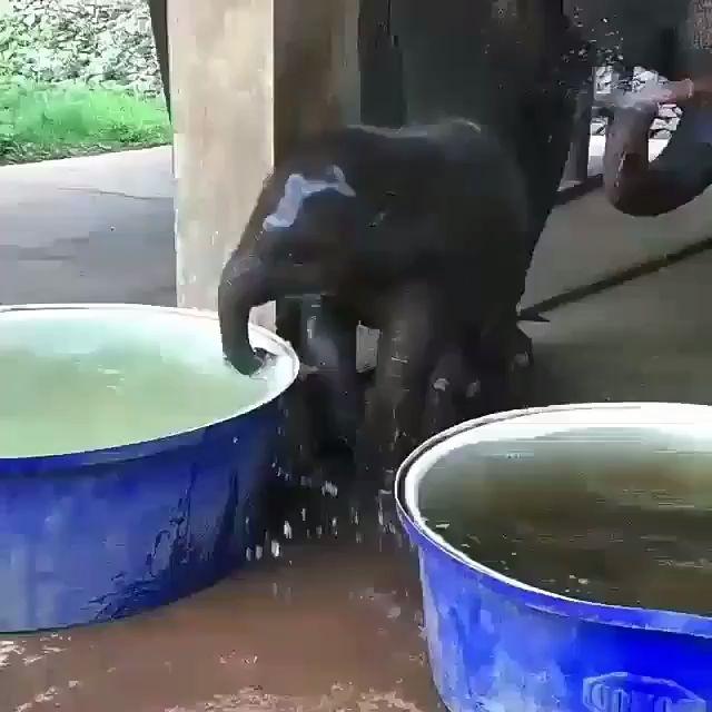 Weitere Videos ansehen   – Tiere tierisch