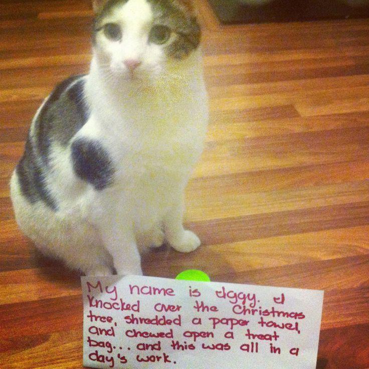 Dog And Cat Shames