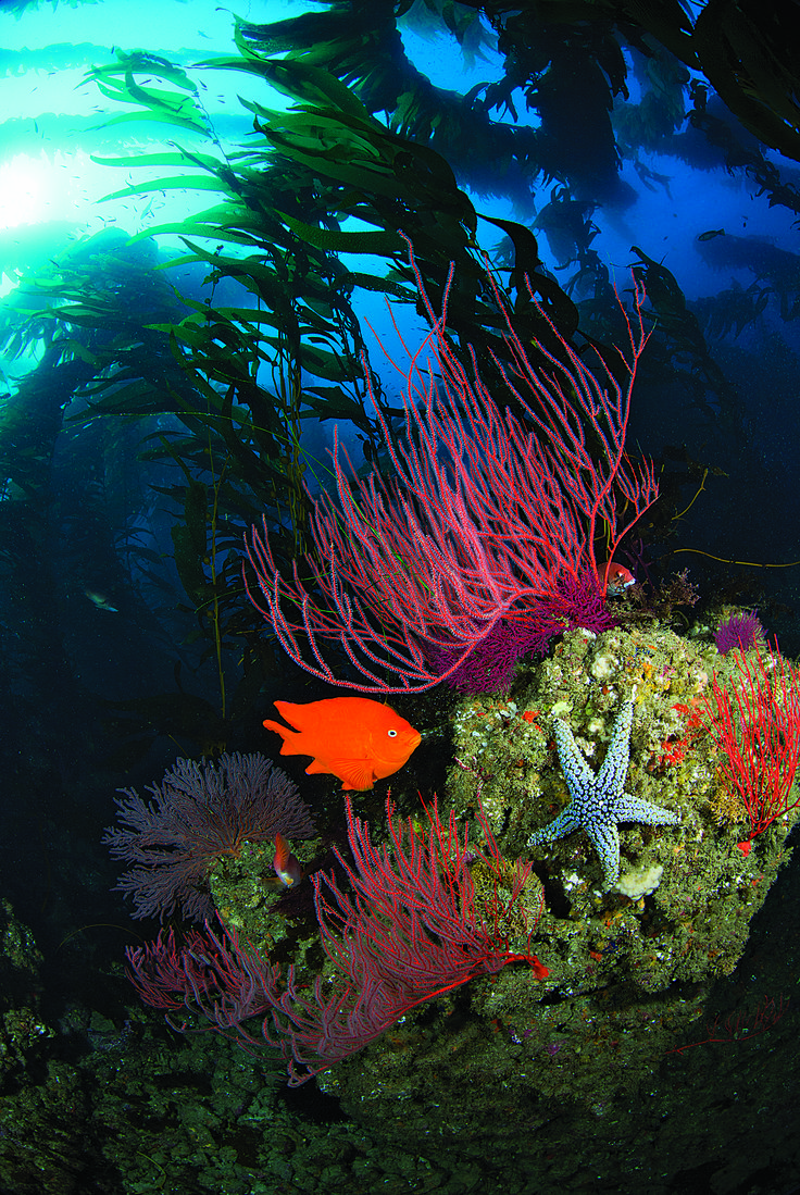 40 Reasons We Love Diving in the USA