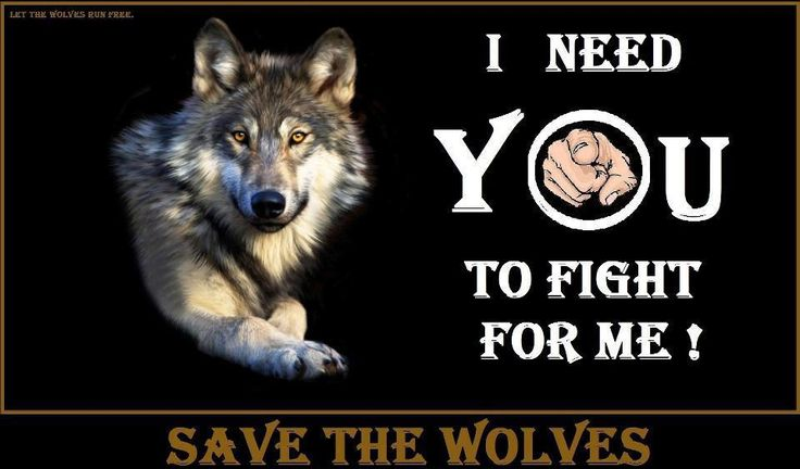 Save The Wolves -The Petition Site-A Site for those who want to support wolves around the world .. Here you can find relevant Petitions and add new ones. Please JOIN, SIGN & SHARE !