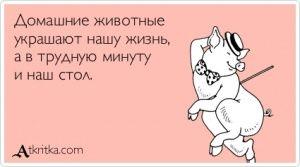 Аткрытка №265988: Домашние животные   украшают нашу жизнь,   а в трудную минуту   и наш стол. - atkritka.com