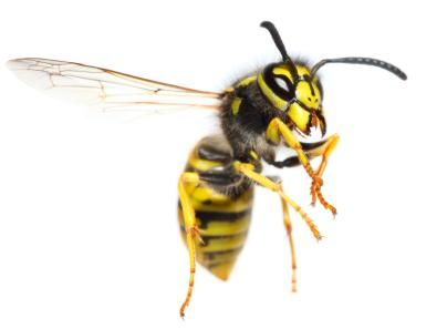 Bee Exterminator Wasp Exterminator 2