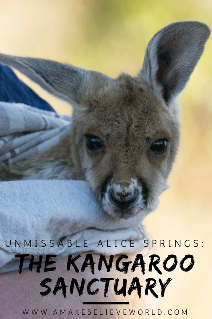 A Make Believe World Travel Blog: Unmissable Alice Springs: The Kangaroo Sanctuary