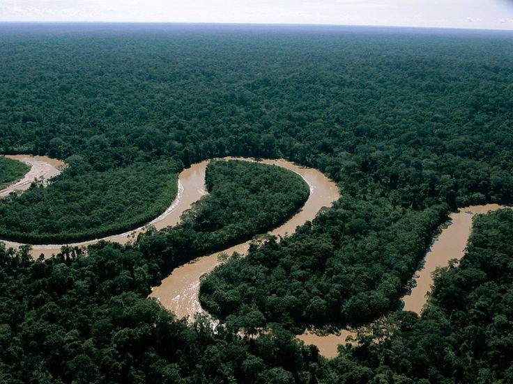 Foreste pluviali tropicali
