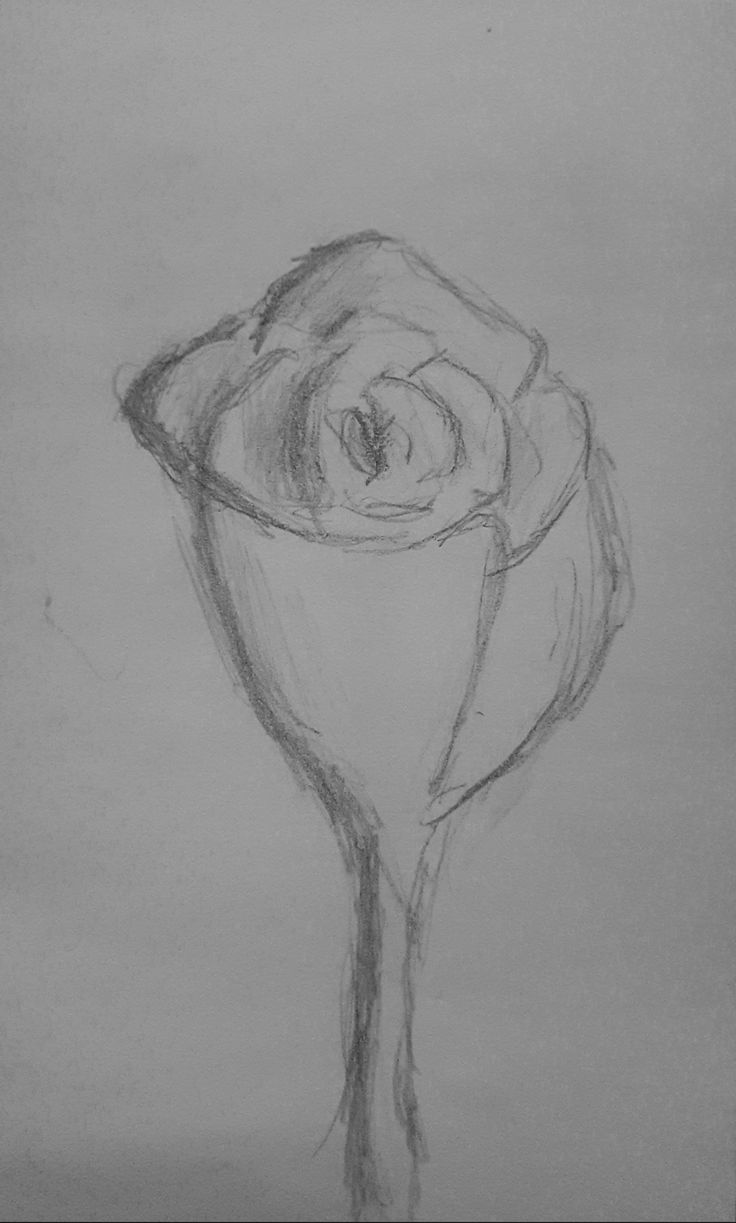 Rose drawing.