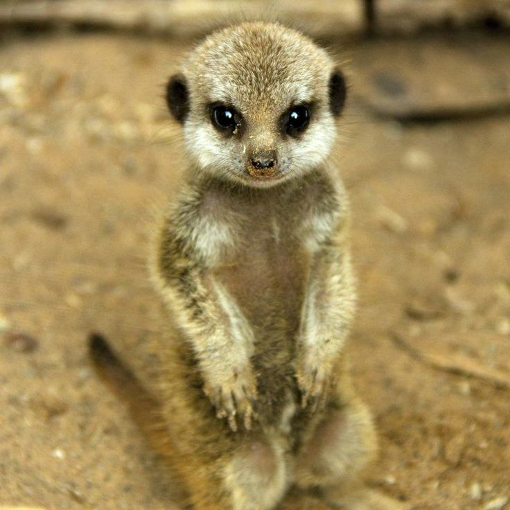 470 Best Images About Amazing Creatures II On Pinterest