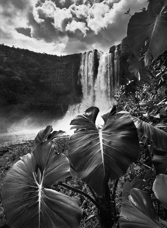 ©Sebastião Salgado / Amazonas Images  - Jardins Naturels https://www.chateau-palmer.com/sebasti%C3%A3o-salgado-expose-%C3%A0-ch%C3%A2teau-palmer