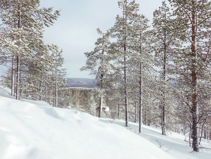 Ma balade du mercredi avec nos chasseurs d'aurores ! On monte en 20 minutes sur une colline ou l'on a un joli point de vue sur le lac gelé. Ensuite direction la forêt pour une petite marche en pleine nature. On arrive alors à une kota où nous nous posons pour déjeuner au coin du feu. Le temps a beaucoup changé aujourd'hui : du vent du soleil de la neige à gros flocon pour finir sur de jolies couleurs pastels au coucher du soleil. Jérôme et moi sommes partis sur le lac gelé en motoneige juste…
