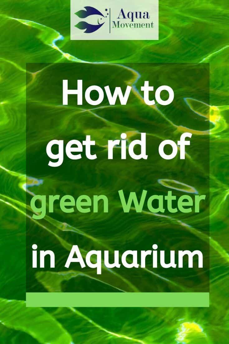 How To Get Rid Of Green Water In Aquarium Fish Tank Fresh Water Fish Tank Aquarium