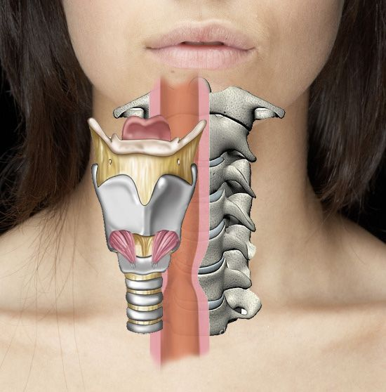 How Does Cervical Spine Surgery Potentially Cause Voice and Swallow Problems? [video] | Fauquier ENT Blog