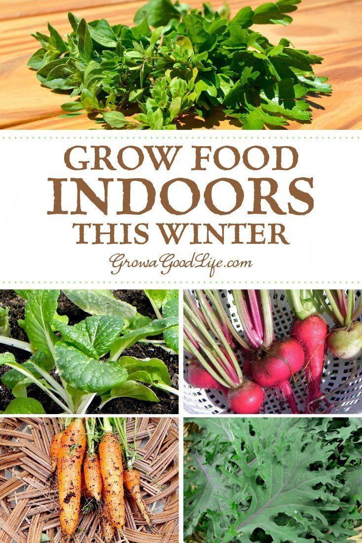 Best Gardening Websites Food Garden Growing Food Indoors