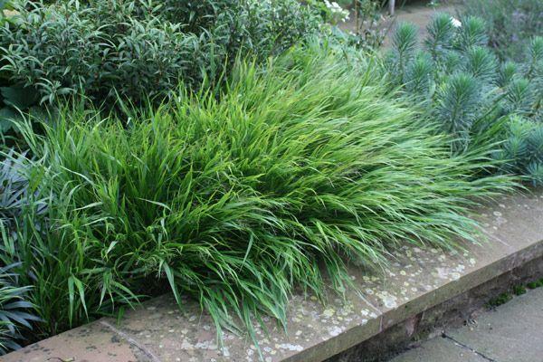 95 best images about vaste planten on pinterest best for Short ornamental grasses