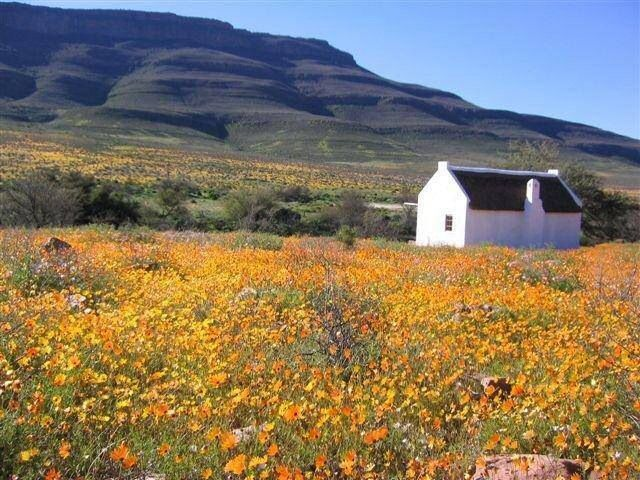 Namakwaland in Spring Time South Africa