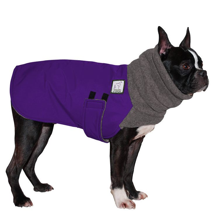 BOSTON TERRIER Winter Dog Coat Dog Coat by VoyagersK9Apparel