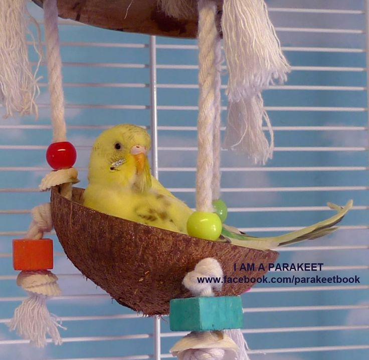 "In My Cradle  (from ""I Am a Parakeet: Parakeet Book for Kids"")"