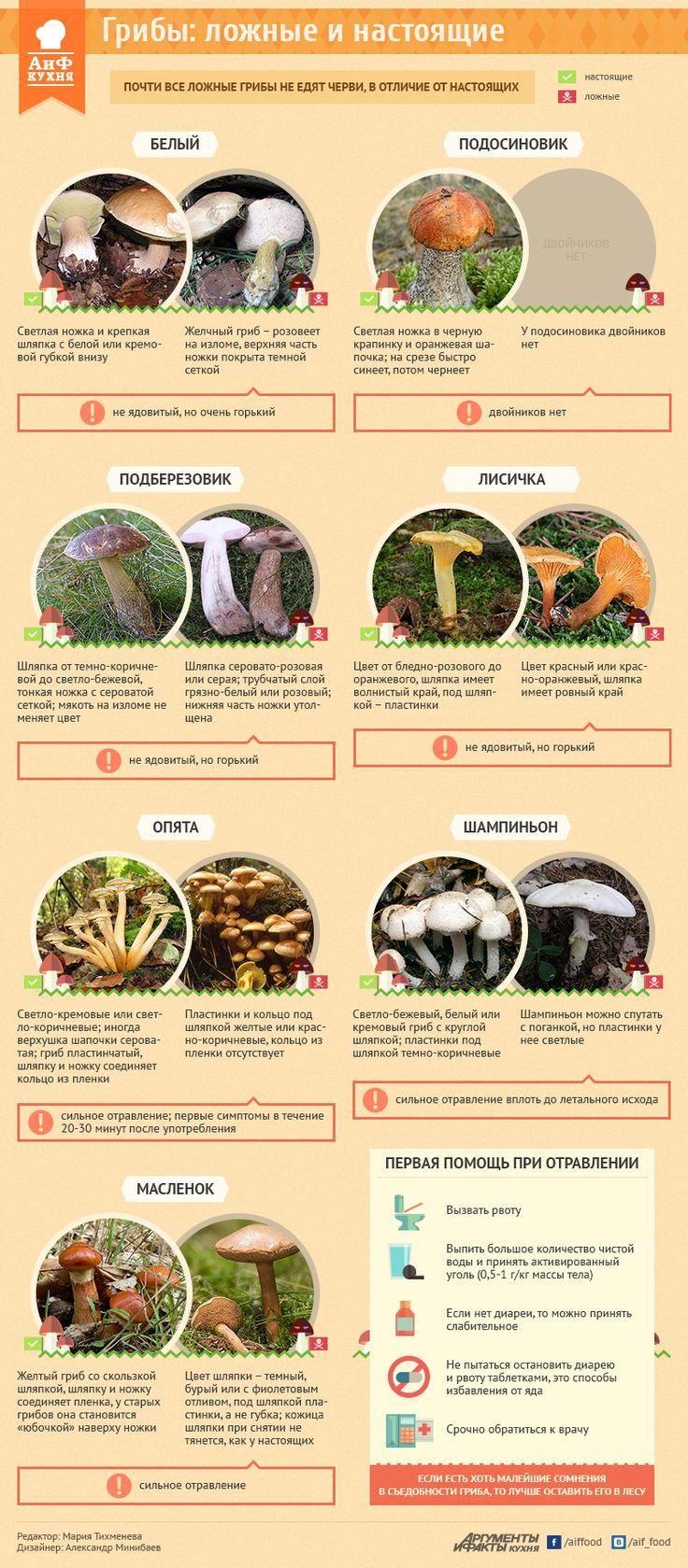 Как отличить съедобный гриб от ядовитого двойника. Инфографика | Продукты и напитки | Кухня | Аргументы и Факты