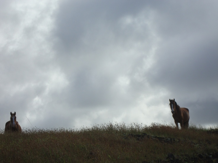 Horses in Easter Island