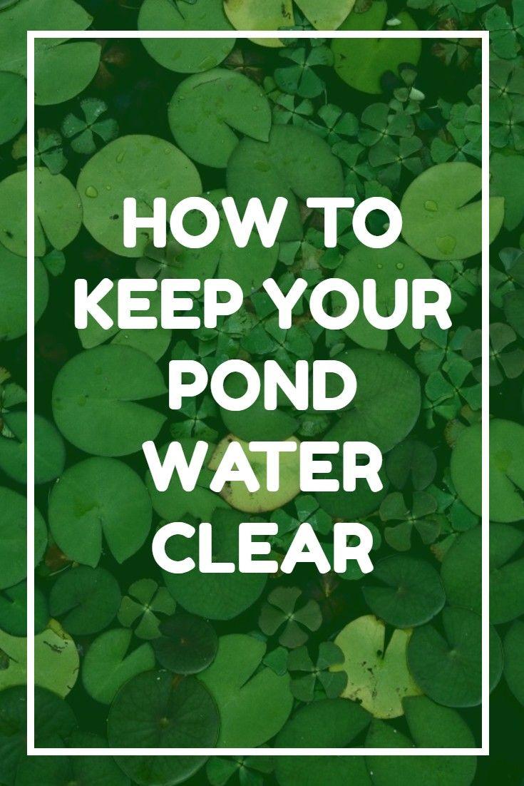 Best 25 Ponds Ideas On Pinterest Pond Pond Ideas And