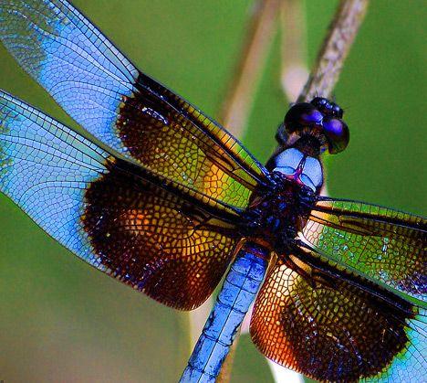 Dragonfly movie spoiler