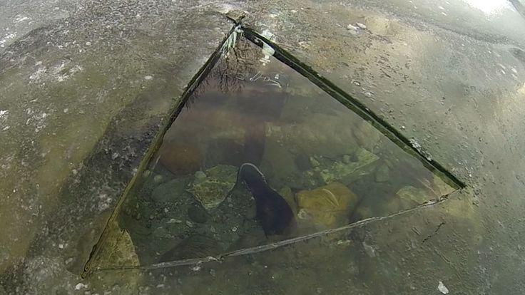 Norjan sukellus