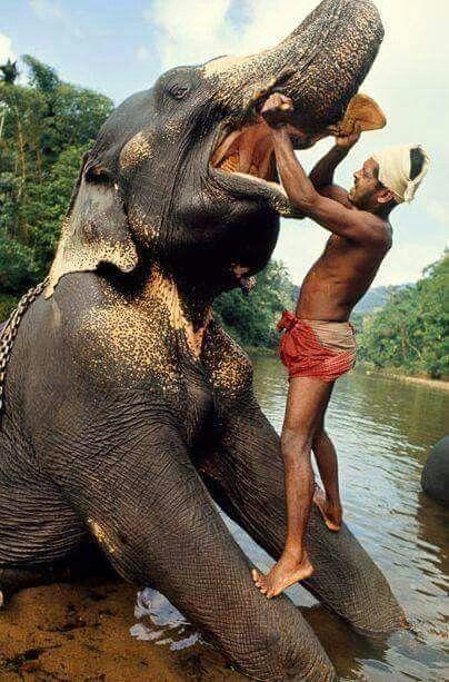 Nádherný slon.