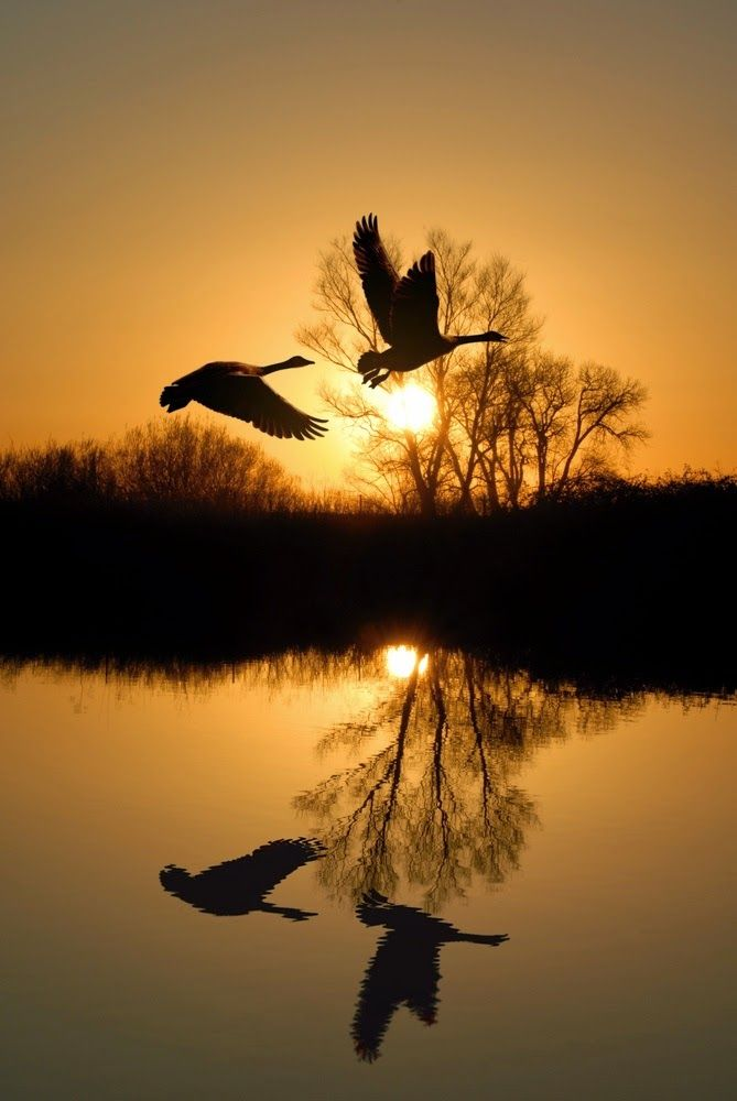 Silhouettes , Sunset flight-Holland