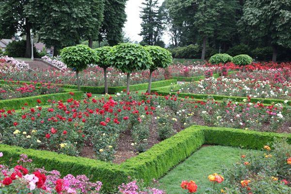 A Classic Rose Garden | Landscape Ideas | Pinterest | Gardens