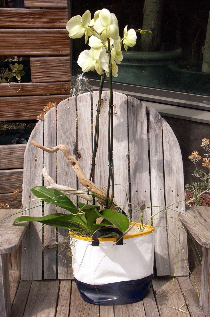 Un composition d'Orchidées pas comme les autres