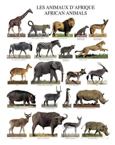 African Animals List Africa, the land with an abundance of different kinds and species of animals. Description from pinterest.com. I searched for this on bing.com/images