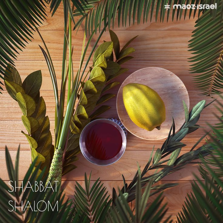 "Leviticus 23:40 ""And you shall take for yourselves on the first day the fruit of beautiful trees, branches of palm trees, the boughs of leafy trees, and willows of the brook; and you shall rejoice before the Lord your God for seven days."" Shabbat Shalom! Join us as we rejoice in the Lord during the Harvest Feast of Sukkot!"