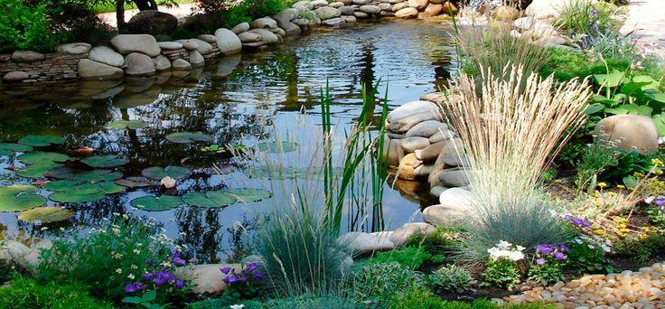 Водные растения для пруда : Строим пруд