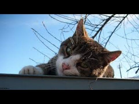 LEISURELY CAT ON THE ROOF