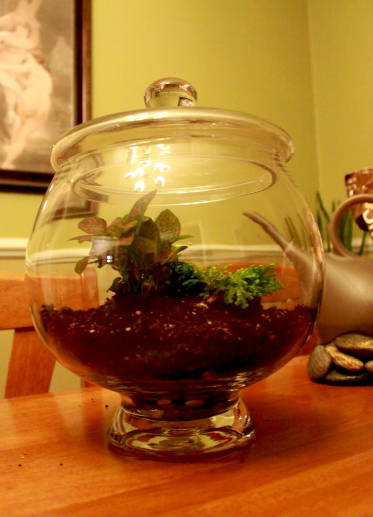 """Alice In Delirium: How to Build a Tropical Terrarium, Different way than a """"desert"""" one"""