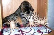 Cinco juguetes para gatos con el rollo del papel higiénico, ¡rápidos y baratos! | EROSKI CONSUMER
