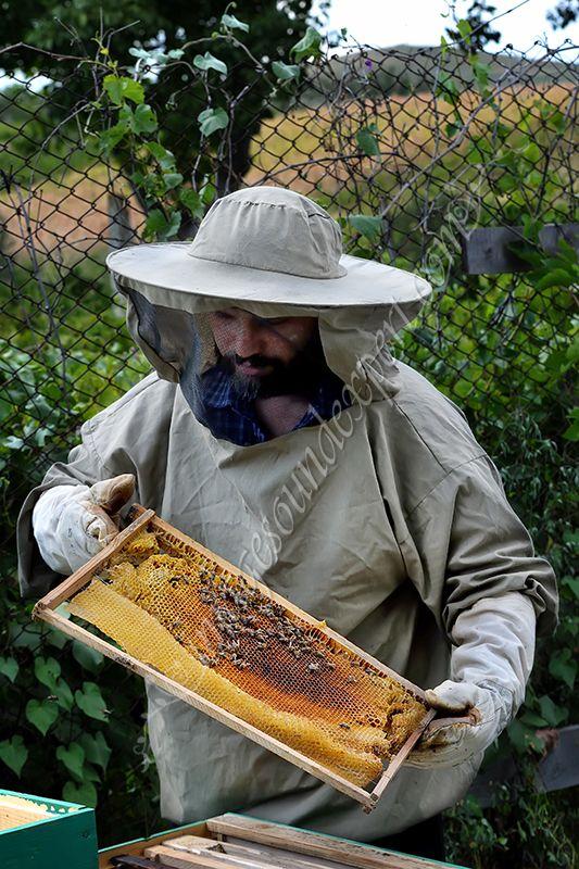 end of summer, sfarsit de vara, faguri cu miere, apicultori