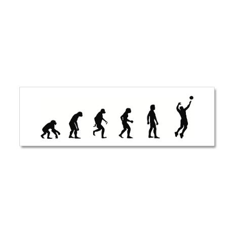Evolution of Mens Volleyball 36x11 Wall Peel